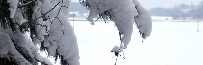 Winterliche, verschneite Landschaft